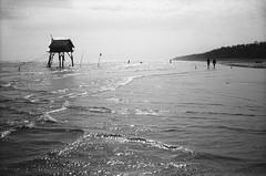 Sunset in Can Gio (Alexandre Moreau/Hydroquinone) Tags: sunset bw beach analog d76 vietnam cangio bessar2m epson700 35mmcolorskoparpancakeii alexandremoreau