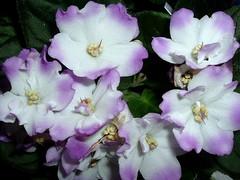 DOWNEAST MAINE..... (jwakanmorgans) Tags: flowers white green shop petals purple blossoms maine gifts greenhouse florist buds bouquet flowershop downeast