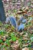 New York, 28 Luglio 2013 (Arsenio_Lupin) Tags: park new york city parco usa verde green nature animals nikon squirrel manhattan central natura animali città scoiattolo d5100