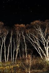 """""""StarLight"""" Holder (Wade.J.) Tags: autumn trees canada lightpainting night newfoundland stars birch nightsky gander"""