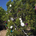 Trees_of_Loop_360_2013_197