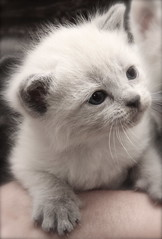 IMG_5760 (Pedro Montesinos Nieto) Tags: cat gatos animales fragile mascotas laedaddelainocencia frgiles