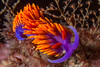 nudibranch1Sept13-13