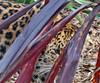 Amur Leopard cropped