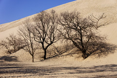 "2014_365070 - Dune de Pilat • <a style=""font-size:0.8em;"" href=""http://www.flickr.com/photos/84668659@N00/13151607675/"" target=""_blank"">View on Flickr</a>"