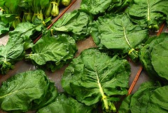"collards • <a style=""font-size:0.8em;"" href=""http://www.flickr.com/photos/75400798@N04/13398896244/"" target=""_blank"">View on Flickr</a>"
