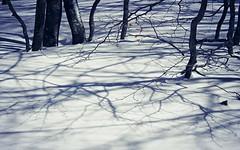 Untitled (PattyK.) Tags: trees snow march europa europe shadows branches greece grecia griechenland myphotos grece ilovephotography winterlandscape amateurphotographer  2013  vasilitsa     prefectureofgrevena