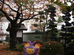 Ambipom in Kasukabe, Saitama 14 (Kasadera) Tags: toys figure pokemon pokmon  kasukabe   pokemonkids  ambipom     ambidiffel capidextre