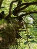 "Im Ebersgönser Märchenwald • <a style=""font-size:0.8em;"" href=""http://www.flickr.com/photos/55428297@N00/19442954321/"" target=""_blank"">View on Flickr</a>"