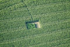 Legalize It (Aerial Photography) Tags: verde green field by landscape la cornfield landwirtschaft feld grün agriculture landschaft deu cannabis 30072004 landshut bayernbavaria deutschlandgermany maisfeld ndb ackerbau ehrnstorf s2p43645