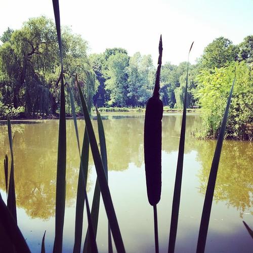 Arboretum de Kornik #nature #kornik #pologne #poland