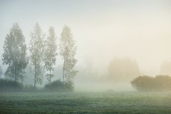 Strong morning fog above the field (ellison_barbara) Tags: blue light sunset summer sky sun sunlight house mist plant nature beauty field grass weather horizontal misty fog mystery rural sunrise paper season landscape outdoors dawn spring day farm vibrant wheat horizon paintings lawn spiderweb meadow scene clear fairy pasture crop land lit agriculture plain idyllic sunbeam tranquil brightly nonurban