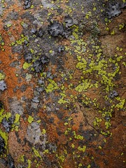 "lichen II • <a style=""font-size:0.8em;"" href=""http://www.flickr.com/photos/44919156@N00/32921541123/"" target=""_blank"">View on Flickr</a>"
