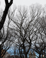 Sunday in the Park-0055-February 19, 2017 (Scott Yeckes) Tags: nyc places winter bark centralpark centralparknyc leafless leaflesstrees spooky tangledbark trees