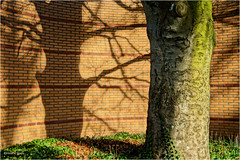 Jagged Shadows (Hindrik S) Tags: shade shadow skaad schaduw schatten tree wall beam muorre boom muur baum mauer brick stien stein steen light ljocht licht beuk bûk buch beech sonyphotographing sony sonyalpha a57 α57 slta57 tamron tamron1750 tamronspaf1750mmf28xrdiiildasphericalif 2017