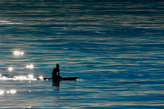 Feral Paddleboarder (Michael Bateman) Tags: bateman michael photography wildlife manhattanbeach california unitedstates us