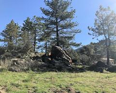 060 Temp-O Puzzle (saschmitz_earthlink_net) Tags: 2017 california orienteering campscherman girlscoutcamp sanbernardinonationalforest sanjacintomountains laoc losangelesorienteeringclub