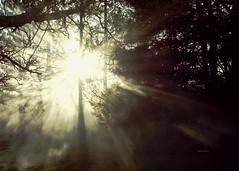 magia (rosalgorri1) Tags: magia bosque niebla rayosdesol
