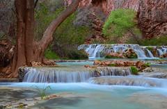 Springtime at Havasu (photo61guy) Tags: nikond7000 nature az arizona waterfalls waterflow watermotion turquoise springtime spring springcolors havasucreek havasucanyon havasupai landscape havasu nikon platinumheartaward