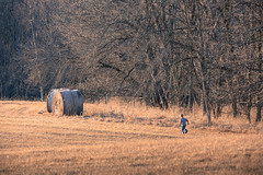 Golden Hour (Philocycler) Tags: goldenhour boy run evening trees haybale field country canon canon5dmarkiii
