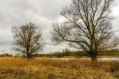 Tree silhouettes against a cloudy sky (RuudMorijn-NL) Tags: autumn bank bare branch branches clouds cloudy colorful countryside creek day dead dutch fall foliage landscape leafless lifecycle natural nature netherlands orange outdoor overcast park plant reeds river rural scene scenic season seasonal silhouette sky stream tree trees trunk view water wild winter withered yellow yellowed biesbosch noordbrabant brabant brabantse silhouet boom kaal kale bomen grauwe wolkenlucht bewolkt wolken donker kreek rivier vergeeld geel riet verdord planten oever waterkant takken steurgat hollandseluchten lucht hemel
