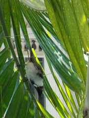 Chatty bird (Connie Churcher) Tags: travel bird thailand temple bangkok buddha royal jade grandpalace temples emerald emeraldbuddha phraborommaharatchawang grandpalacetemples