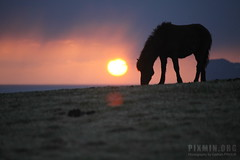 Sunset at Tumabrekka (priour.gaetan) Tags: sunset sky horse canon iceland 5d 6067 5dmk2 tumabrekka