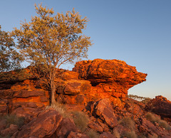 Kings Canyon at Sunset (Serendigity) Tags: sunset tree rock nationalpark desert australia canyon outback overhang kingscanyon northernterritory eroded watarrka