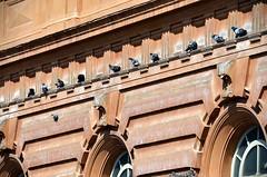 Pigeons / Tuvid (Eemeez) Tags: italy house pigeons livorno