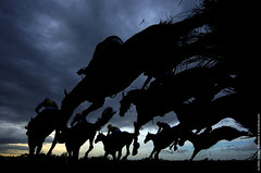 Horse & Rider (nlptrainer2011) Tags: horses appaloosa paint donkeys riding pony fjord ponies mustang arabian mules horseback thoroughbred andalusian quarterhorse clydesdale shetlandpony horseman friesian equines dutchwarmblood gypsyvanner horsecare olderhorses seniorhorses