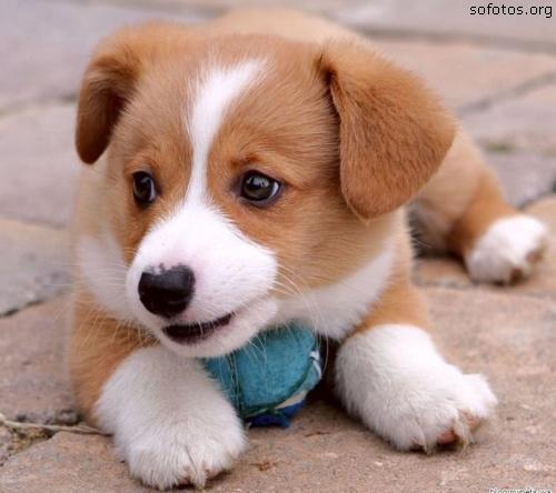 Filhotes de cachorro fofo
