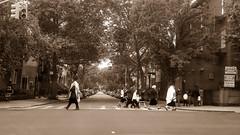 Brooklyn Orthodox Jews (iakoubtchik) Tags: street family newyork brooklyn walking crossing synagogue jew jewish judaism crosswalk judaica orthodoxjews