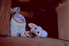 Lost Control (Nicole Carazo) Tags: park old blue dog white black flower coffee rock metal analog cat vintage garden dead living weird eyes doll dolls blueeyes snail siamese heavymetal creepy bloody heavy res spikes creep bloood livingdeaddolls