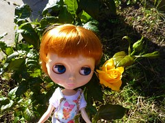 Yellow Rose in October