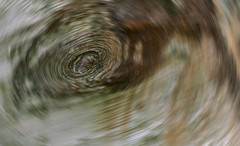 Black Hole (histogram_man) Tags: park uk england abstract tree london bark swirl bexley