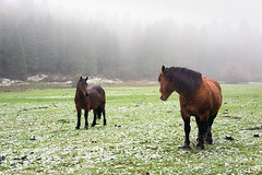Miradas (Mimadeo) Tags: ranch trees winter wild two horses horse brown white mist mountain snow cold tree nature wet beautiful beauty field grass animal fog rural forest season landscape outdoors freedom countryside frozen looking farm country meadow calm pines pasture staring eachother