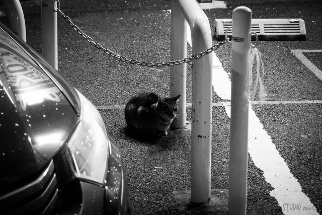 Today's Cat@2013-11-25