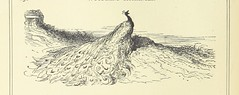 Image taken from page 142 of 'Woodland Romances; or, Fables and Fancies'