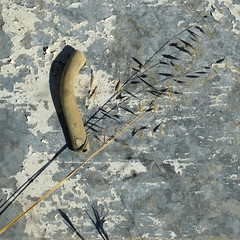 (Rob de Vries,) Tags: abstract weeds crete rookuzz