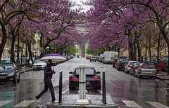 Mauve (Michel Couprie) Tags: street trees paris france rain umbrella fleurs canon eos blossom pluie arbres 7d michel rue arcdetriomphe parapluie ef50mmf18 couprie