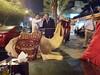 A camel at Ali Baba's