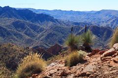 Ridge Top Tour (john white photos) Tags: blue red mountain plant mountains rock 4x4 native australian rocky dry australia outback remote flindersranges fourwheeldrive arkaroola yakka kangarootail ridgetoptour