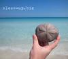 Cuba #166 (close-up.biz) Tags: ocean blue sea summer vacation sky flower beach nature water beauty up animal closeup seaside sand marine pattern hand close natural background cuba shell seashell varadero urchin urchins hold echinoidea