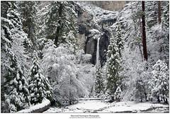 Lower Yosemite Fall (Sherwood Harrington) Tags: california snow yosemitefalls landscape yosemitenationalpark yosemitevalley loweryosemitefall