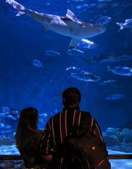 Eat 'em ... go ahead eat 'em!!! (praline3001) Tags: fish canon aquarium shark neworleans sealife aquariumoftheamericas saltwateraquarium audubonaquarium canoneos70d