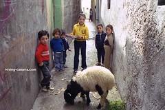 Children in Tartus, Syria (deemixx) Tags: syria tartus streetphotography travelphotography