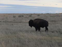 American Prairie Reserve 16