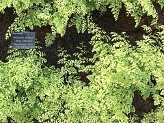 Duthie Park Est 1881 Aberdeen Scotland (DanoAberdeen) Tags: freshair nature bloom flowers horticulture greenhouse garden duthie dano park aberdeen scotland scottish highlands bonny bonnie trees countryside forest tropical ferns autumn winter spring candid amateur iphone cameraphone iphone7plus colour red yellow pink blue cacti wintergardens davidwelch rare exotic plants arid shrubs amaryllis roses tulips anthurium calla freesia climatechange climate conservation preservation gardener beechgrove oak willow dobbies botanic chelsea show cactus ecosse scotia duthiepark 2017 schotland iskoçya skottland schottland albain шотландия škotija flickrexplore abdn danoaberdeen