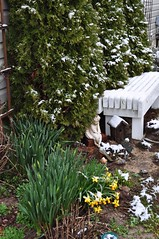 cherub and the old red shoes (ladybugdiscovery) Tags: cherub old red shoes daffodil garden flowers shrub bench snow cold crystals birdhouse