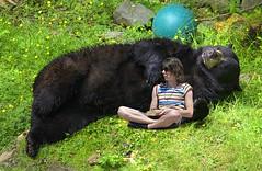 Napping Bear (swong95765) Tags: bear guy man relaxing snooze calm animal zoo zoology